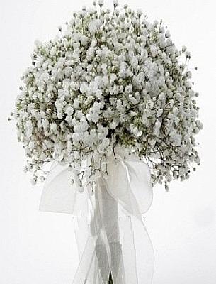 Şans Çiçeği ( cipsofilya )