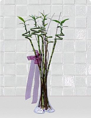 5 dal bambu vazo içerisinde