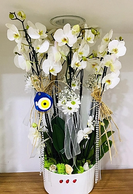8 Dal Beyaz Orkide Aranjmanı Seramik Saksıda