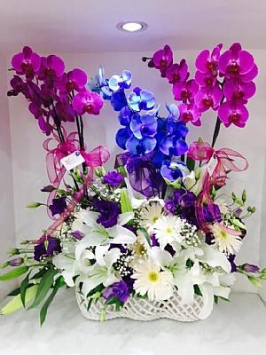 orkide çeşitlerinden özel aranjman