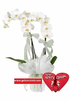 Çiftli Orkide + Kalp Kutu İçerisinde Çikolata